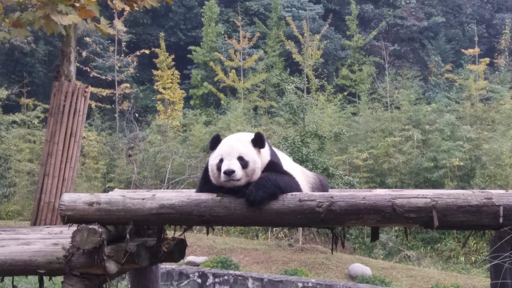 Panda CAS Trip to China