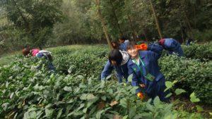 Sichuan Panda CAS Trip to China
