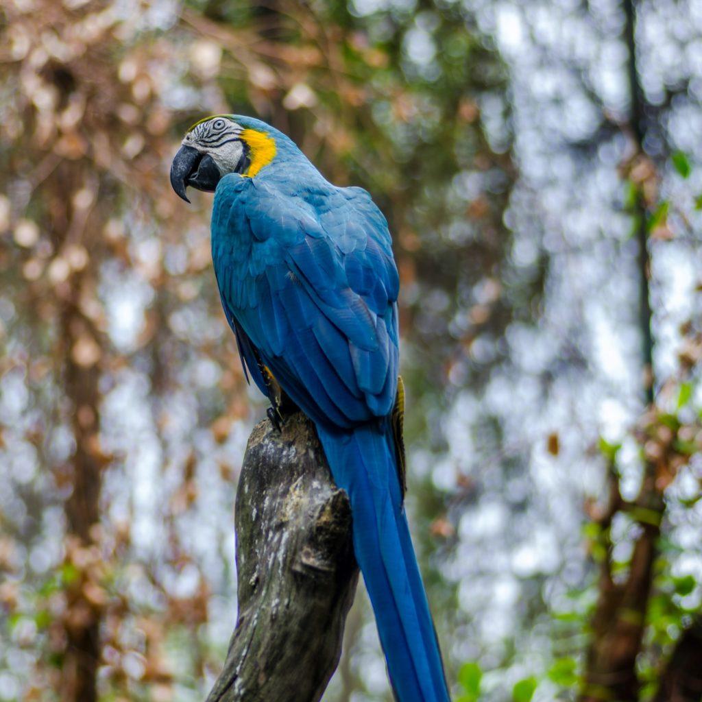 Sentosa Island - Bird