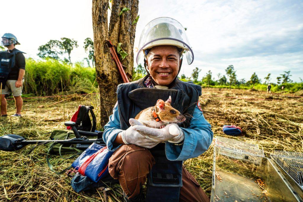 hero rats detect mines cambodia
